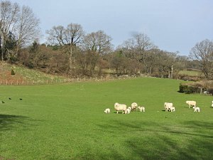 view of fields and sheep from the holiday caravan