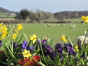 the fields arounfd the caravan and cottage